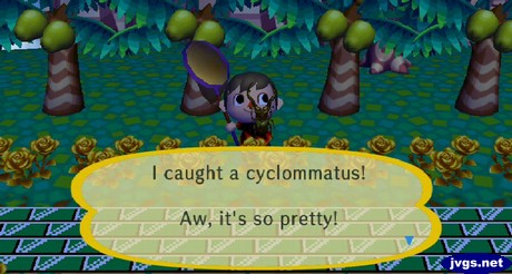 I caught a cyclommatus! Aw, it's so pretty!