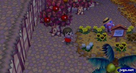 Franklin hides behind a sign post during the harvest festival in Animal Crossing: City Folk.