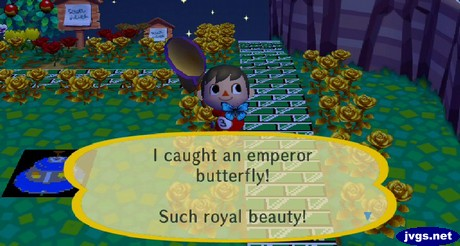 I caught an emperor butterfly! Such royal beauty!