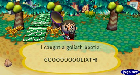 I caught a goliath beetle! GOOOOOOOOLIATH!