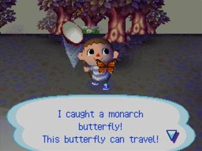 I caught a monarch butterfly! This butterfly can travel!