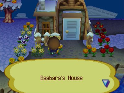 Flowers planted all around Baabara's house.