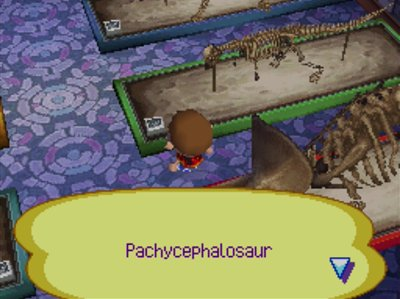 The pachycephalosaur fossil in the museum in Animal Crossing: Wild World.