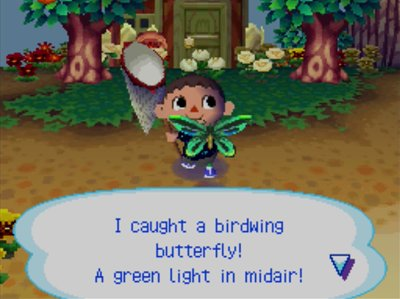 I caught a birdwing butterfly! A green light in midair!
