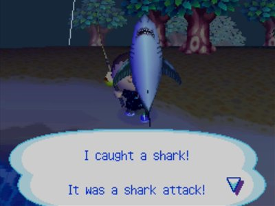 I caught a shark! It was a shark attack!