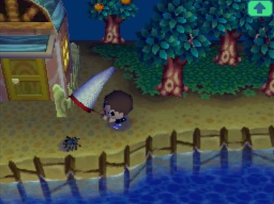 Catching my first tarantula in Animal Crossing: Wild World for Nintendo DS.