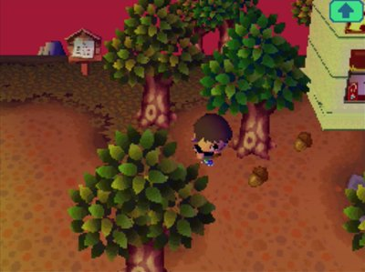Picking up acorns during the Acorn Festival in Animal Crossing: Wild World.