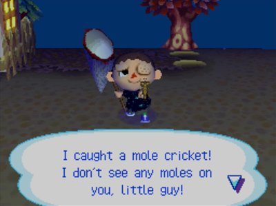 I caught a mole cricket! I don't see any moles on you, little guy!