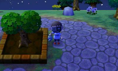 My town tree has grown.