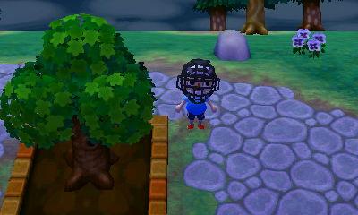 My town tree getting bigger.