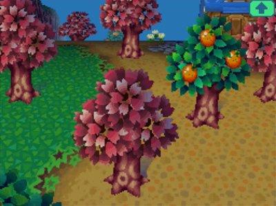 Flower Fest Begins Jeff S Acww Blog